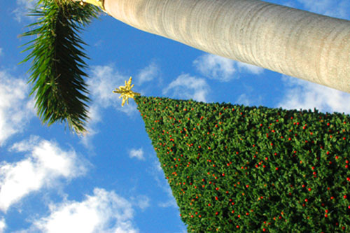 Delray Beach 100 foot tall Cristamas Tree